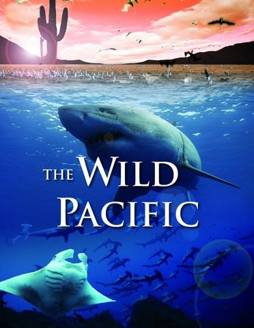 The Wild Pacific 4K 2016 Ultra HD 2160p
