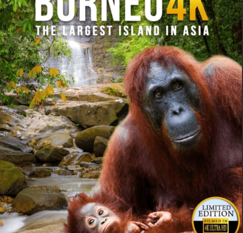 Borneo: The Fascination of Asia 4K 2017 DOCU Ultra HD 2160p