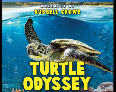 Turtle Odyssey 4K 2019 DOCU Ultra HD 2160p